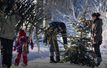 Fæld selv juletræer