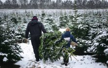 Abildgaardens Juletræer